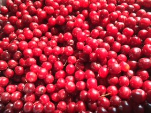 Saskatchewan Cherries